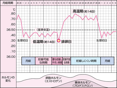 基礎 体温計 違い 体温計